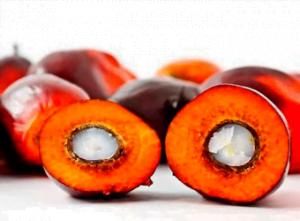 Las magníficas propiedades cosméticas del aceite de palmiste
