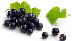 Read more about the article Aceite de grosella negra